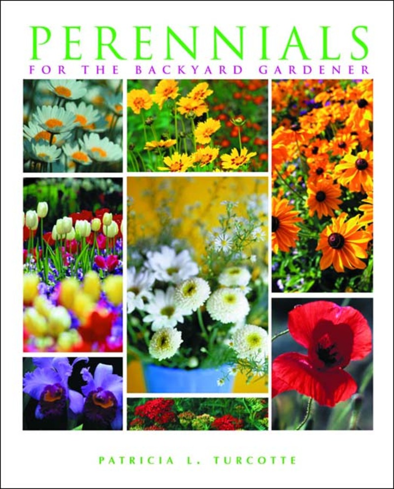 Book cover for Perennials for the Backyard Gardener by Patricia Turcotte