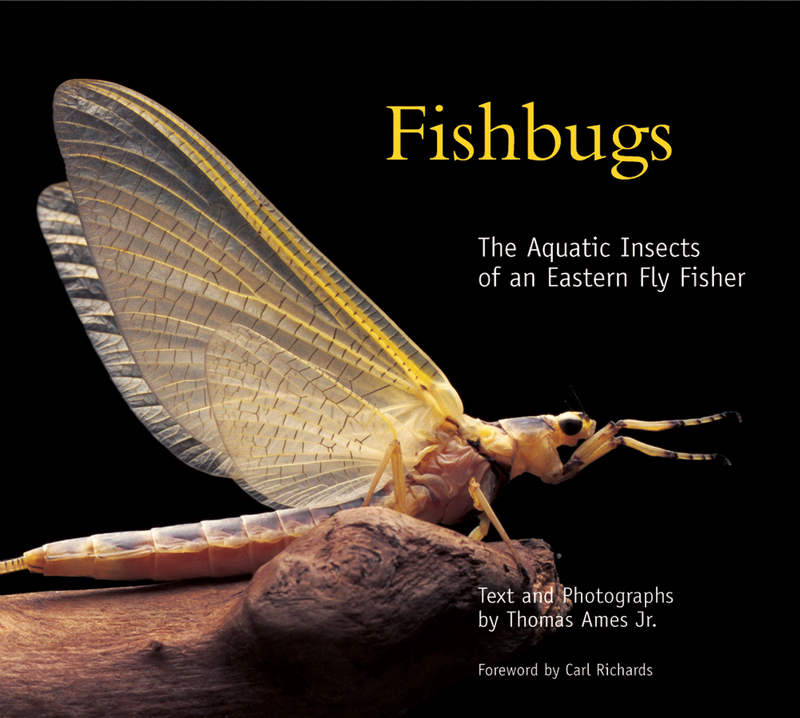 Book cover for Fishbugs by Thomas Ames