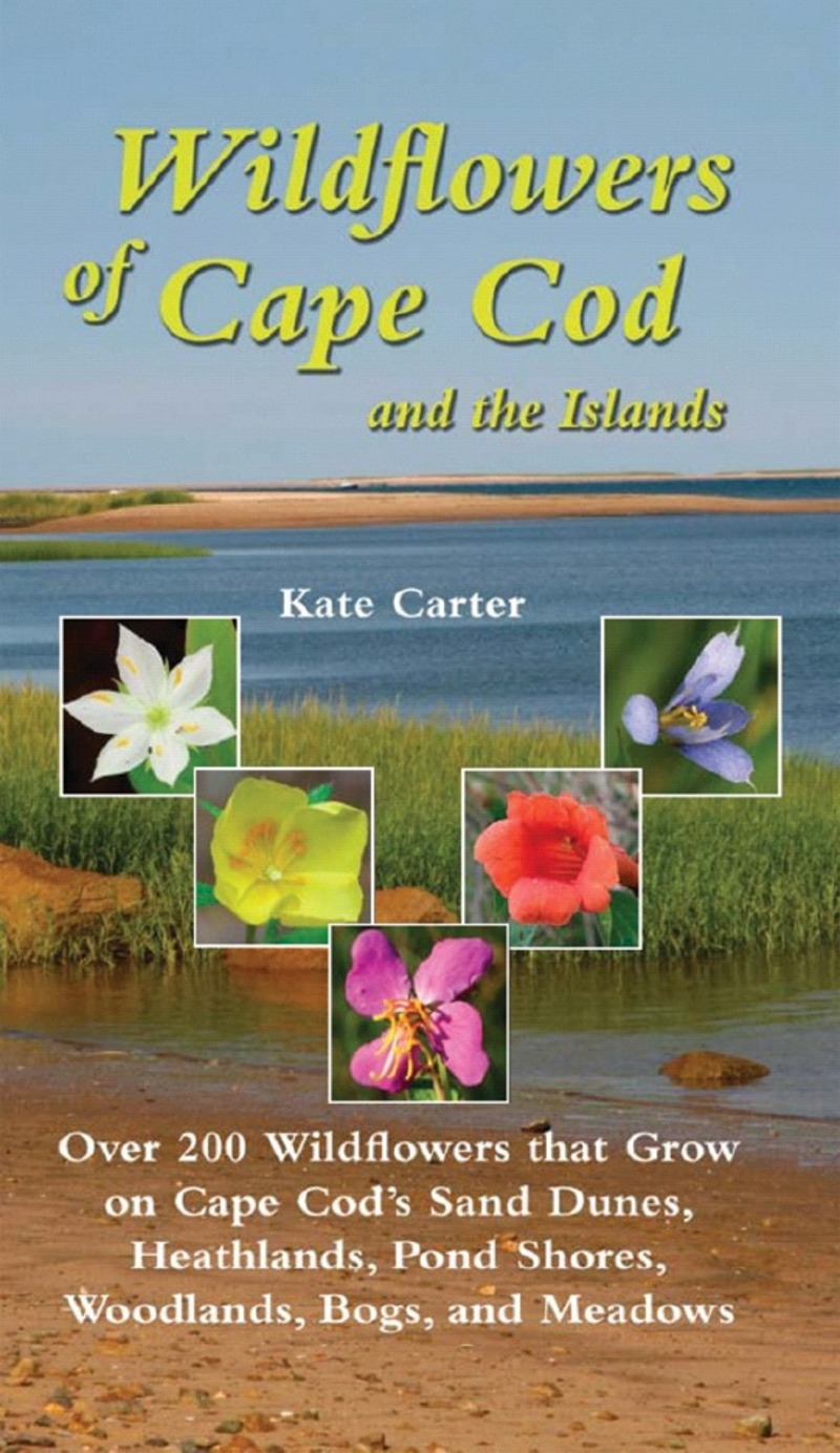 Book cover for Wildflowers of Cape Cod & the Islands by Kate Carter