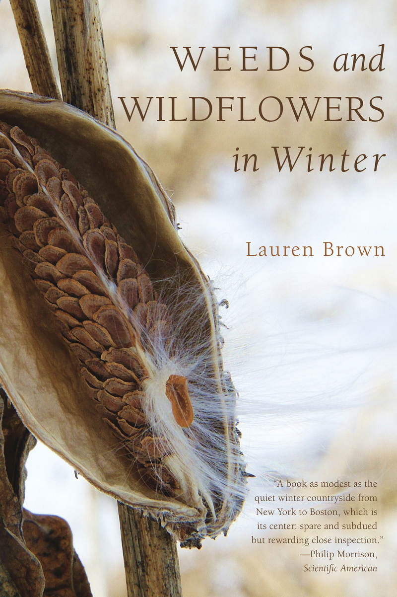 Book cover for Weeds and Wildflowers in Winter by Lauren Brown