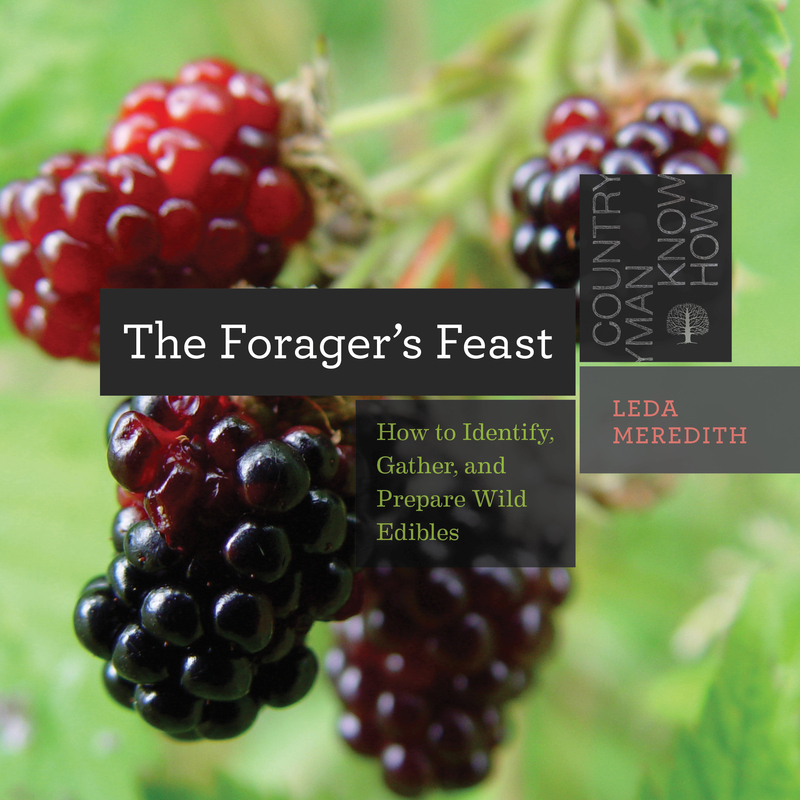 Book cover for The Forager's Feast by Leda Meredith