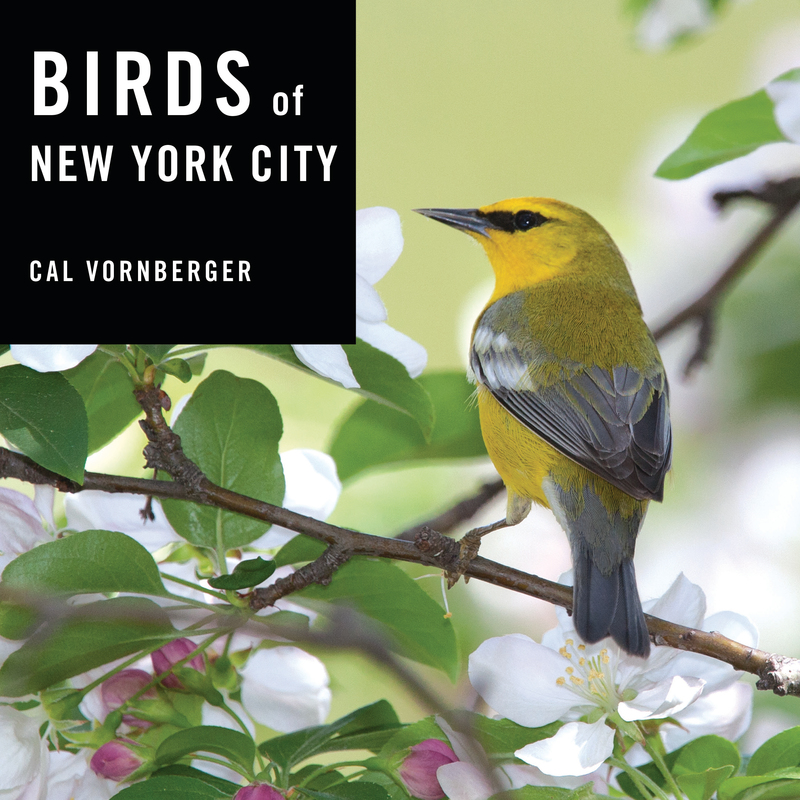 Book cover for Birds of New York City by Cal Vornberger