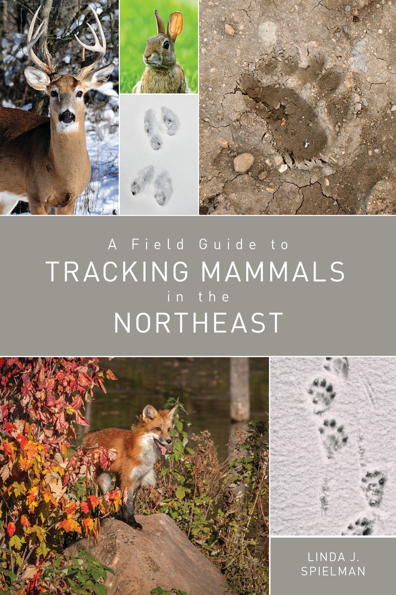 Book cover for A Field Guide to Tracking Mammals in the Northeast by Linda J. Spielman