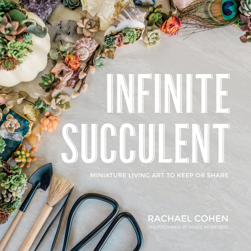 Book cover for Infinite Succulent by Rachael Cohen
